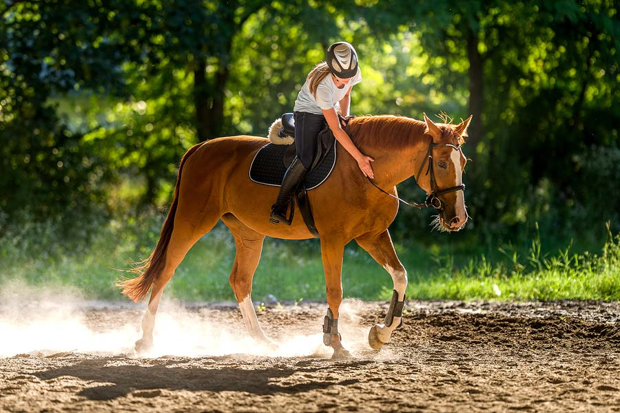 Blue Ridge Area Horseback Riding